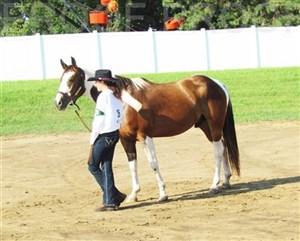 Woodbury Co. Fair 2016 -- Horse Show