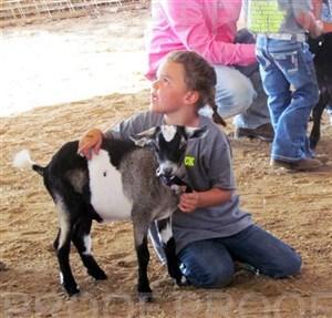 Woodbury Co. Fair 2016 -- Bucket Goat Show