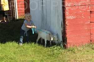 FallFest at the Woodbury County Fair's Old Town