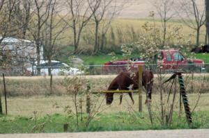 Horse grazing next to the elevator