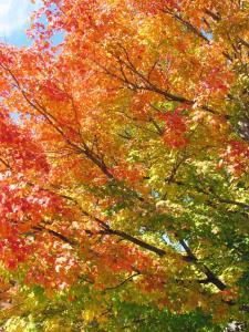 Fall Photos in Kingsley