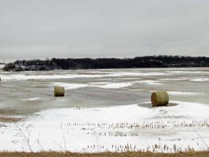 Round bales south of Kingsley
