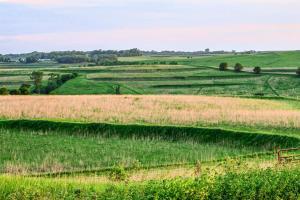 Terraced pastureland